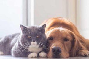 Jak pies z kotem – warsztat psychologiczny o satysfakcji w małżeństwie